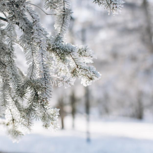 Ferie i den kolde tid